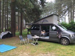 Pine camping