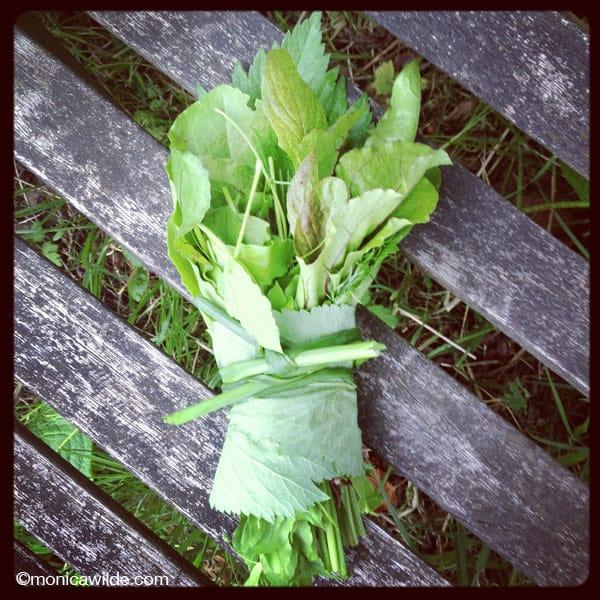 Wild salad
