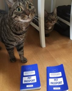 cat with pet passport